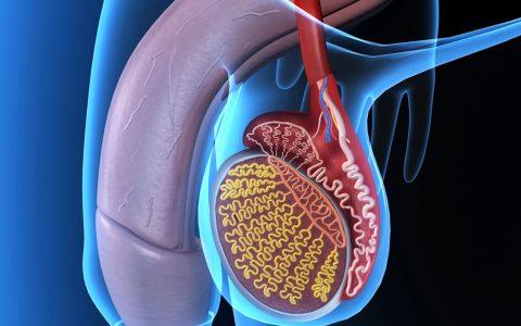Câncer de testículos